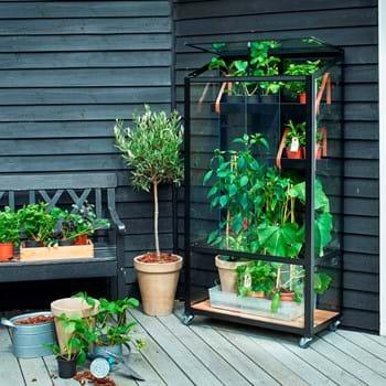 Dyrk under glas på din altan eller i gårdhaven