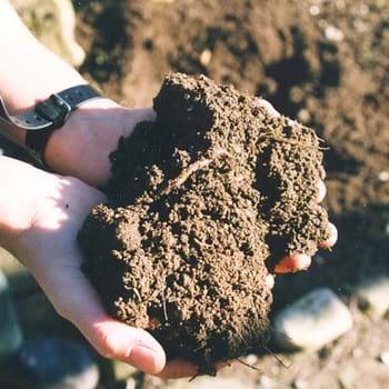 Skifter du jord i dit drivhus?