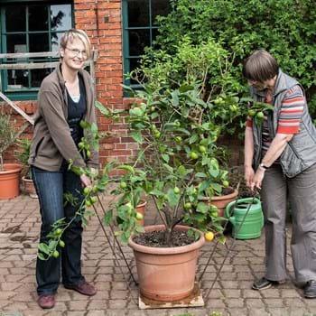 Kübelpflanzen über den Winter bringen