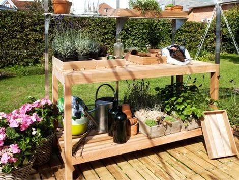 Botanica plantebord, cedertræ