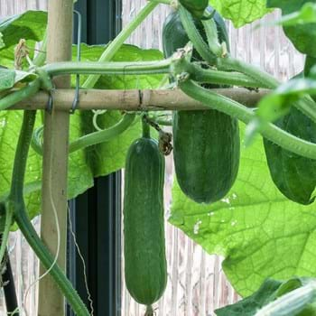 Wissenswertes rund um Samen für die Anzucht