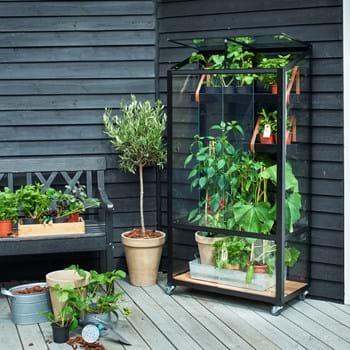 Kultivieren Sie unter Glas auf ihrem Altan oder im Hinterhofgarten